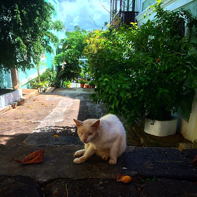 un gato con un ojoWild cats were roaming all over the city, and most of them weren't afraid of people and would let you pet them. #oldsanjuan #catsofoldsanjuan #puertorico